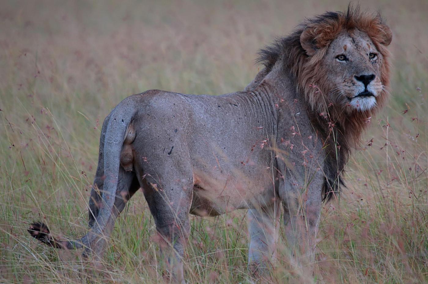 The Roar of Mara