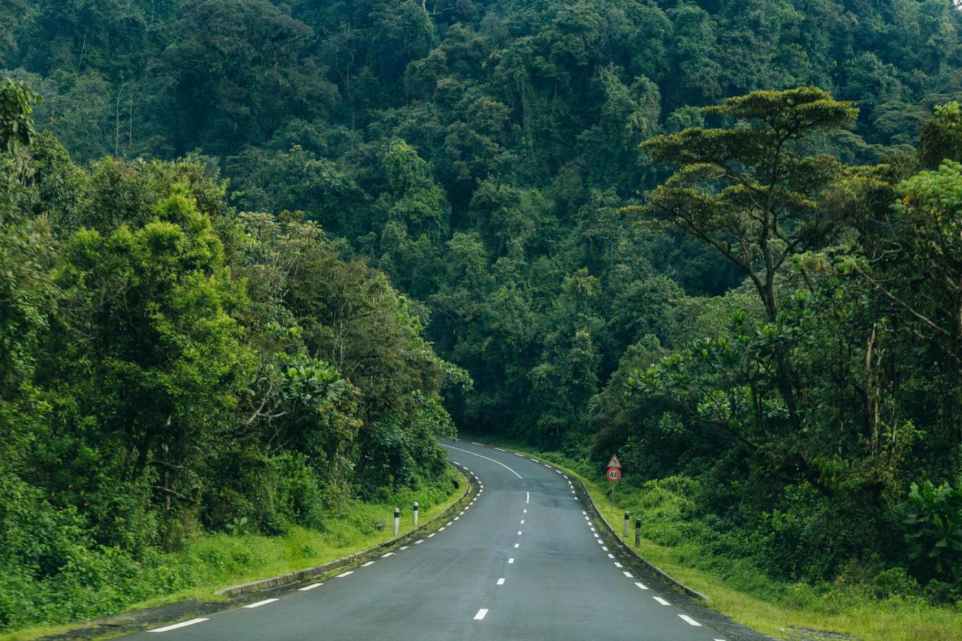 Rwanda Golden Monkey Trek